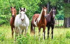 caballos pura sangre - Buscar con Google