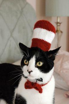"""je ne suis pas trop pour qu'on """"déguise"""" les chats (au moins qu'on laisse tranquilles ceux qui, comme le mien, s'y refusent absolument...) mais je dois avouer que la ressemblance est étonnante !..."""