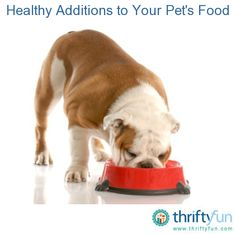 This guide is about healthy additions to your pets food. There are ways to add extra nutrition to your pets food.