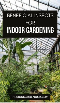 Did you know that there are approximately one million identified insect species in the world? And did you know that less than of all of them are known as pests? Here are some of the Beneficial Insects For Indoor Gardening. Greenhouse Gardening, Indoor Gardening, Container Gardening, Indoor Plants, Gardening Tips, Harmful Insects, Beneficial Insects, Room With Plants, Types Of Plants
