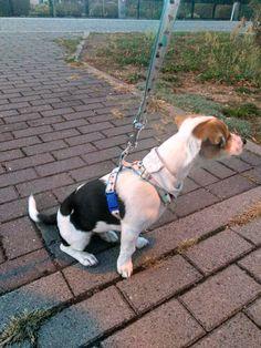 Hundegeschirr und Leine selbst genäht