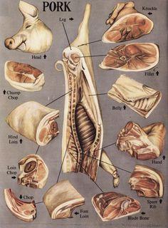 Image detail for -UK pork butchery chart Meat Butcher, Butcher Shop, Meat Cooking Chart, Meat Art, Modernist Cuisine, Best Meat, Food Charts, Vintage Cookbooks, White Meat