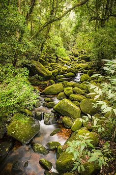 O Parque Nacional da Serra dos Órgãos é uma Unidade de Conservação Federal de Proteção Integral, subordinada ao Instituto Chico Mendes de Conservação da Biodiversidade (ICMBio), cujo objetivo maior é o de preservar amostras representativas dos ecossistemas nacionais.