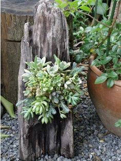Driftwood and succulents...need we say more?
