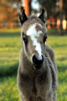 How Adorable Is This Baby Nature Pinterest Horse - Adorable miniature horses provide those in need with love and care