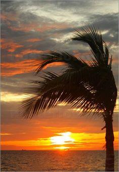 strand palme sonnenuntergang sonnenuntergang pinterest. Black Bedroom Furniture Sets. Home Design Ideas
