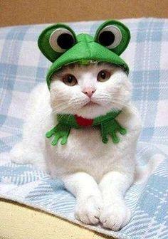 6196e7e4bf1 Avocado Oil Potato Chips   Camy PIcs   Cute cat costumes, Cat ...