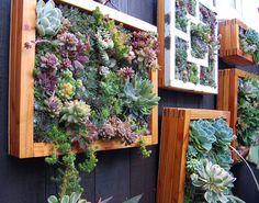 Maak van de schutting een verticale tuin. Vetplanten werken prima hiervoor