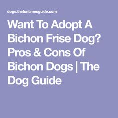 Want To Adopt A Bichon Frise Dog? Pros & Cons Of Bichon Dogs | The Dog Guide