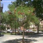 Árboles Nativos de Argentina | Plantas & Jardín
