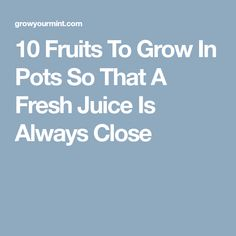 10 Fruits To Grow In Pots So That A Fresh Juice Is Always Close