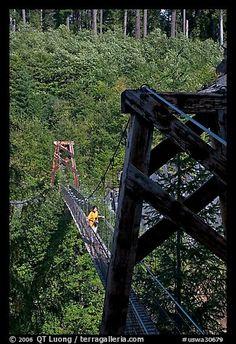 Suspension bridge over Lava Canyon. Mount St Helens National Volcanic Monument, Washington