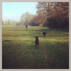 Mabel and Margot out for an early walk