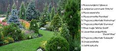 Сад | 200 фотографий