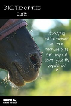 how to keep flies away, tips for fly control in horse barn - Pferd My Horse, Horse Love, Horse Riding, Mini Horse Barn, Miniature Horse Barn, Horse Feed, Riding Gear, Fly Control, Josie Loves