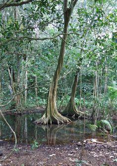 Parque Nacional Corcovado, Reserva San Pedrillo, Península de Osa, Costa RIca
