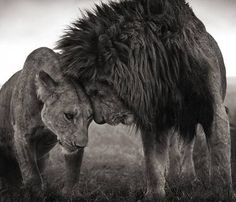 Strength and beauty and lions!