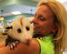 barley possum | lovely possum o possum my love