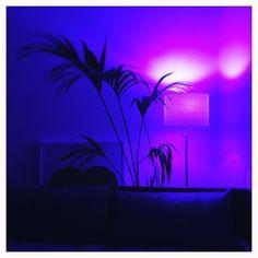 Northern Lights, Lighting, My Style, Nature, Travel, Home Decor, Voyage, Homemade Home Decor, Aurora