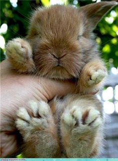 a handful of fuzzy cuteness!