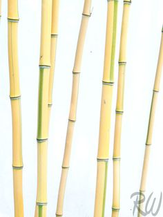 Bamboo at The Huntington Botanical Gardens / http://www.rwongphoto.com/blog/favorite-photos-2011/