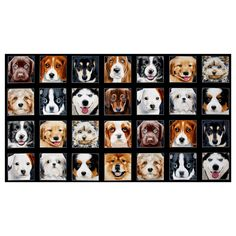 """Adorable Pets Dogs 23.5"""" Panel Black from @fabricdotcom  Designed by Keith Kimberlin for Elizabeth's Studio, this cotton print fabric features squares of adorable puppies smiling for their photo session. It measures approximately 44"""" x 23.5"""" and is perfect for quilting, apparel and home decor accents. Colors include black, white, sky blue, pink, blue grey and shades of grey and brown."""