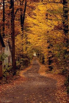 Autumn road to the cabin