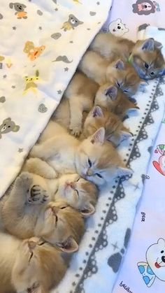 Cute Puppies And Kittens, Cute Baby Dogs, Baby Cats, Kittens Cutest, Funny Cute Cats, Cute Cat Gif, Cute Funny Animals, Cute Cat Video, Cat Fun
