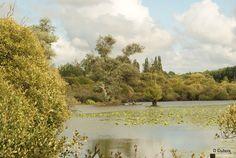 Lac de Grand lieu - 113118434504119207618 - Picasa Albums Web