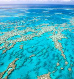 The Great Barrier Reef: Definitely go snorkeling!