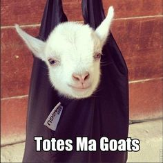 Totes Ma Goats...I should NOT be hearing this in Darth Vader's voice and think it's hilarious.  But, I do.  LOL