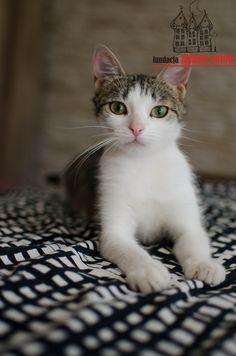 Figa is looking for a home ... #cute #cutecats #cats #caturday #kot #koty #neko #gato #katz #katzen #kittens #chat
