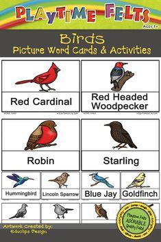 Birds PreK Printable Digi Download
