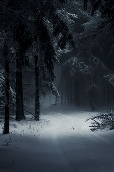 "gardenofelegance: "" explanationpoint21: "" classyxsexxy: ""Sleeping Forest | cXs "" """