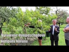 Ivan Hričovský: Ako vytvoriť kotlovitú korunu? - YouTube Gardening, Youtube, Plants, Lawn And Garden, Plant, Youtubers, Youtube Movies, Planets, Horticulture