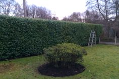 Bed and hedge work on highfield close by warren smith