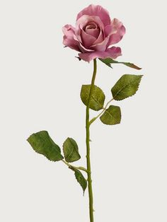 Let the moment stay Half Open Rose Spray Antique Lavender flowers overlay Flowers Nature, Real Flowers, Pretty Flowers, Rose Reference, Aesthetic Roses, Lavender Aesthetic, Rose Leaves, Rose Stem, Open Rose