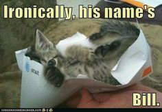 maybe    If all my bills came in kitten form, I'd be a happy, crazy cat lady.