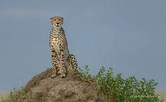 Неповторимая природа Африки глазами Дэвида Ллойда « FotoRelax