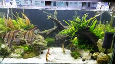 my home aquarium 27/3/2015