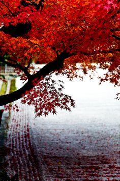 Zen garden in autumn, Kyoto, Japan