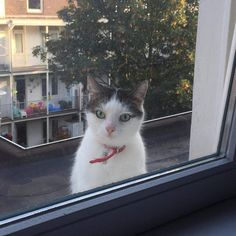 My friend's neighbor's cat comes and stares at him sometimes.   http://ift.tt/2azHhXC via /r/cats http://ift.tt/2adDiDU  cats funny pictures