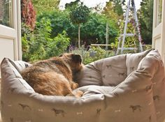 Who else plans on spending their entire weekend like this? #FridayFeeling Credit for this adorable shot of Douglas the Border Terrier : Twitter @scribblersdrey