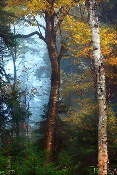 ***Autumn colours (Mt-Tremblant, Québec) by Difruscia Photography