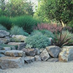Grasses are waaaay underused in the landscape...look how they soften this stone border in the garden. Everyone should have a few good stones and grasses in the garden.