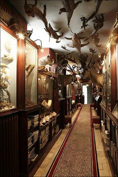 les cabinets de curiosité. I don't like the dead animals, but I like the unique cabinets along the hallway. It has a lot of character.