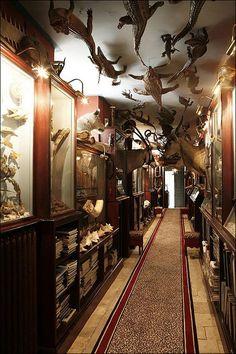les cabinets de curiosité.