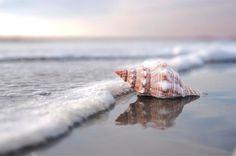 Sea Shell Art Beach Photography Home Decor Nautical by BreeMadden. , via Etsy.