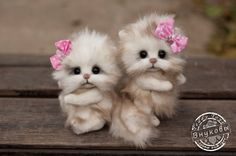 two cats  Mimi and Lili make to order cat cat Teddy by teddiktoys