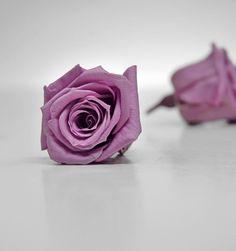 "Preserved Roses 1"" Rose Heads Lavender 12 for $24"